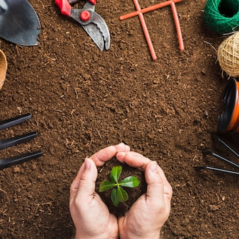 Top view of gardening tools and gardener planting