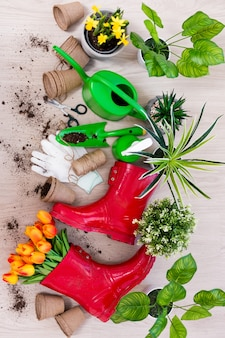 Top view of gardening tools, potted plants and spring flowers on wooden table background