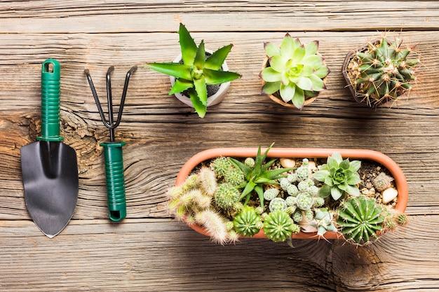 Top view of gardening tools on the wooden floor