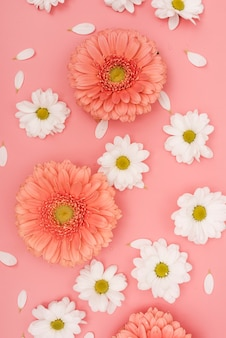 Top view gerbera and white daisies
