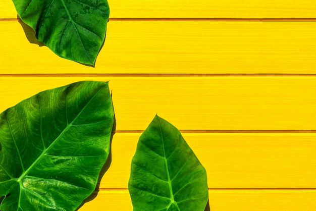 Top view green bon leaves on yellow wood texture
