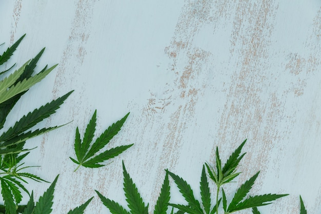 Top view of green cannabis leaves border on a light blue wooden background