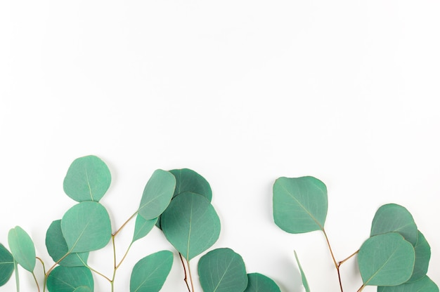 Top view of green eucalyptus leaves on white background.