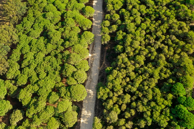 Вид сверху на зеленый лес и дорогу занял дрон