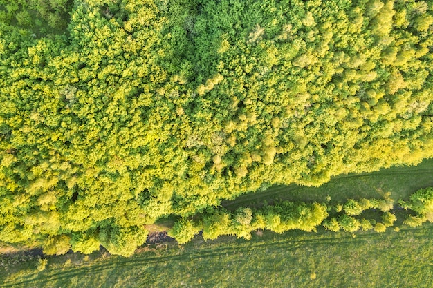 Top view of green forest on sunny spring or summer day. drone photography, abstract background.