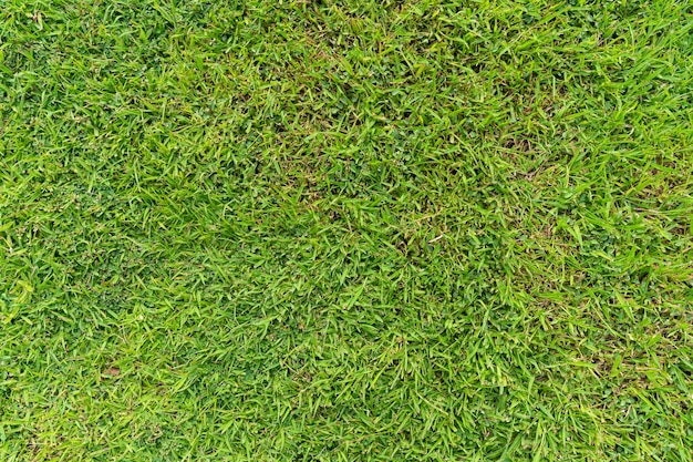 Top view of green grass ground texture natural background in fresh spring.