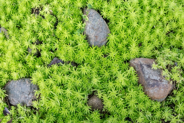 Top view of green grass growing up on the cover of the gap between the stones.