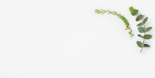 トップビューの緑の葉とコピースペース