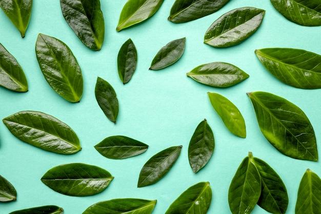 上面図緑の葉の品揃え