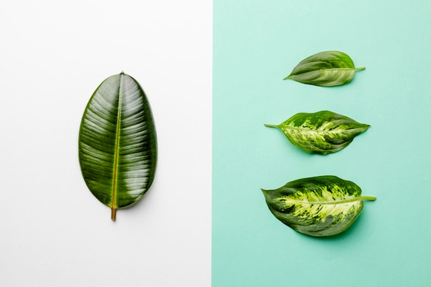 Top view green leaves on bicolored background