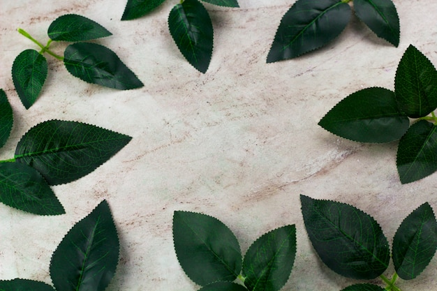 Top view green leaves frame marble background copy space