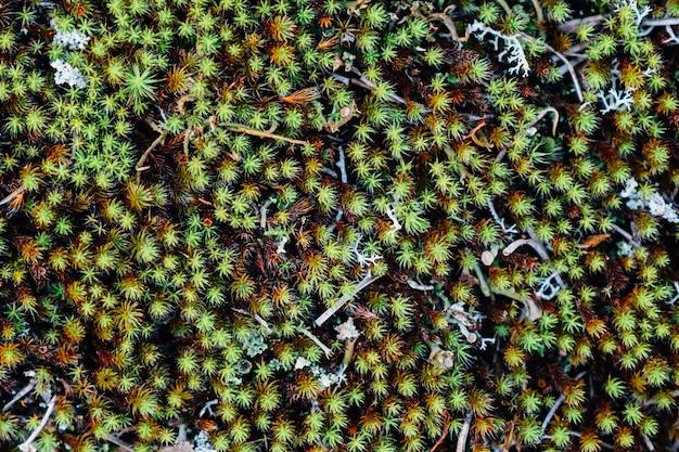 Top view of green leaves in meadow