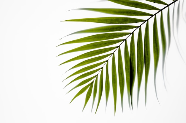 화이트에 상위 뷰 녹색 잎