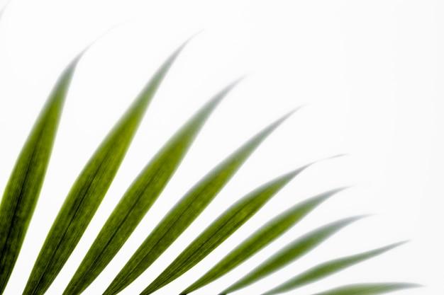 Vista dall'alto foglie verdi su bianco con copia spazio