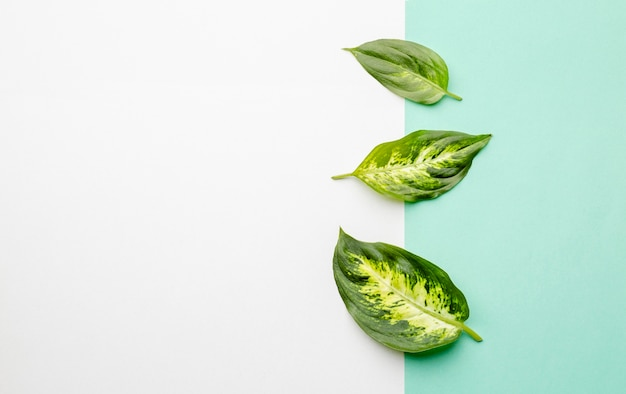 コピースペースのある上面図の緑の葉
