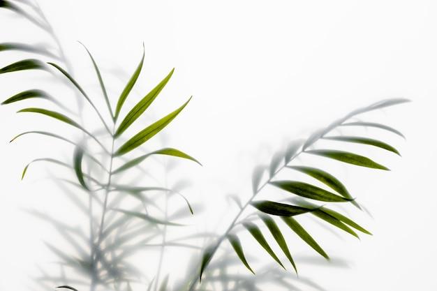白の上面図緑の植物
