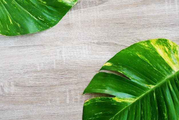 Top view of green tropical leaf (jungle monstera) on wooden background.