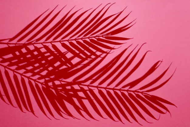 Top view of green tropical leaf shadow on red background.