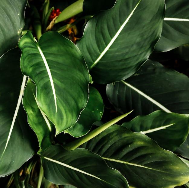 상위 뷰 녹색 열대 잎