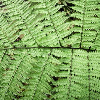 Top view green tropical leaves