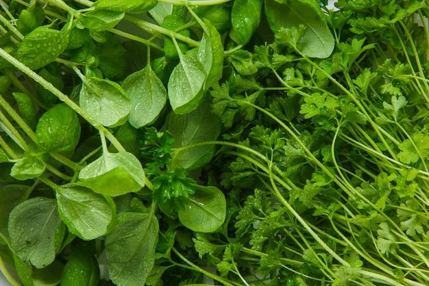 Вид сверху зелень листьев овощей. горизонтальный