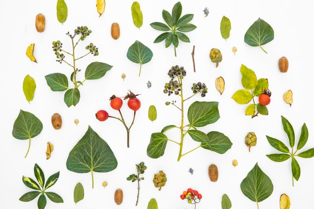 Группа вид сверху зеленых листьев и цветов