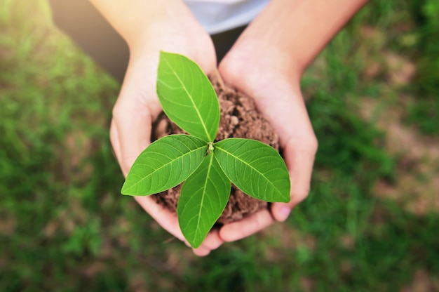 Top view of hand holding young plant growing on dirt with green grass background. environment eco concept