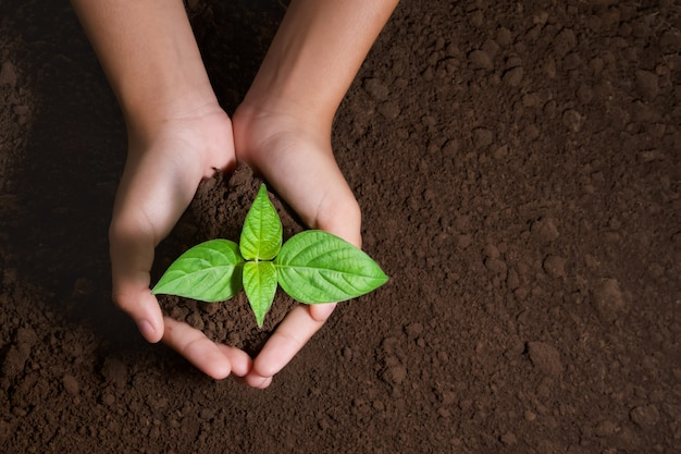 Top view hand holding young tree for planting in garden