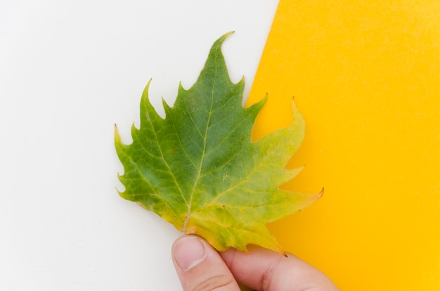 Top view hands holding autumn leaves