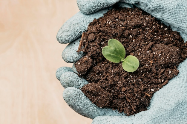 Top view of hands with gloves holding soil and plant with copy space