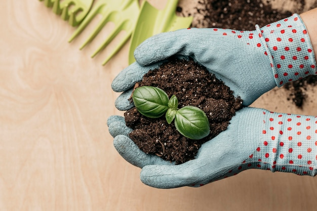 Top view of hands with gloves holding soil and plant