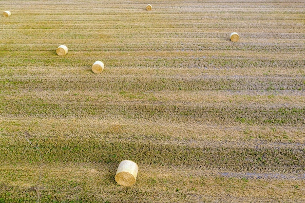 Top view of hay bales, agriculture field after harvest with hay rolls
