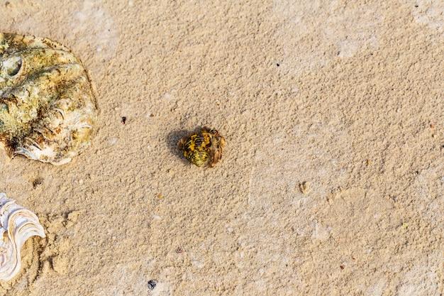 Top view of hermit crab on the beach. Premium Photo