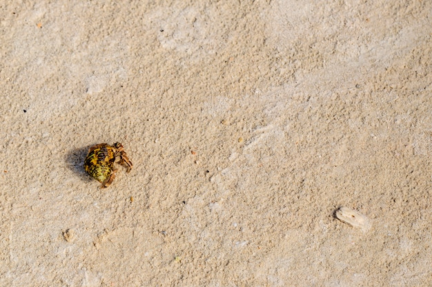 Top view of hermit crab on the beach.
