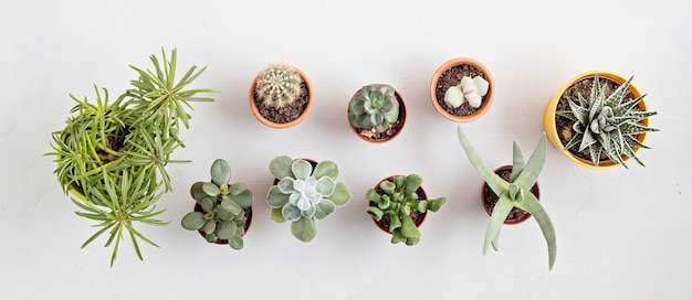 Top view of home potted plants. home gardening, interior decoration concept. copy space