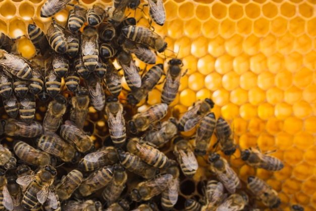 Top view honeycomb with bees