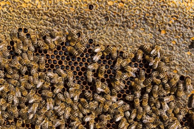 Top view honeycomb