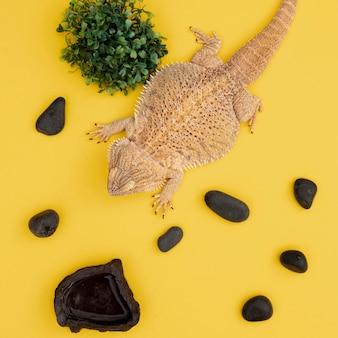 Vista dall'alto dell'animale domestico iguana con rocce e vegetazione