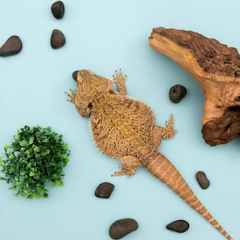 Top view of iguana with vegetation