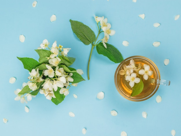 Top view of jasmine flowers and jasmine tea on a blue surface. an invigorating drink that is good for your health.