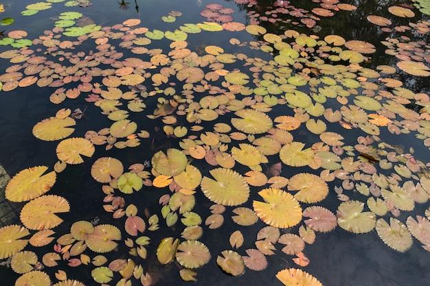 로터스 연못의 상위 뷰 풍경입니다. 연꽃 연못의 화려한-이미지