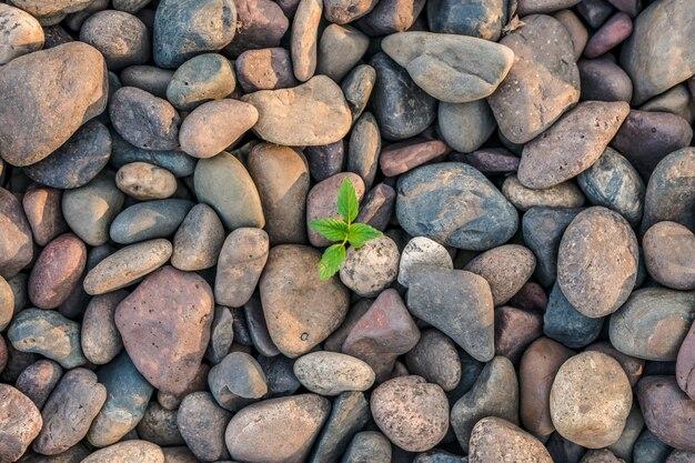 それを通して成長している緑の植物とトップビューの大きな小石