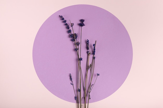 Top view lavender on paper circle concept