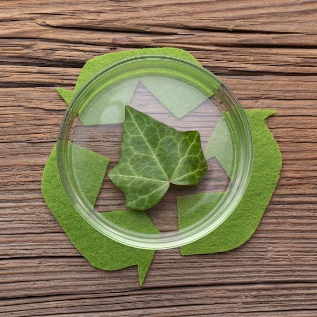 페 트리 접시에 상위 뷰 잎