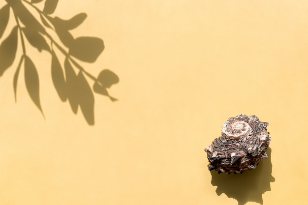 Top view of leaf shadow and seashell. minimal summer concept.