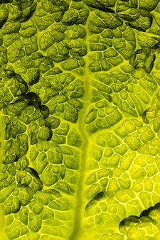 Top view of leaf texture