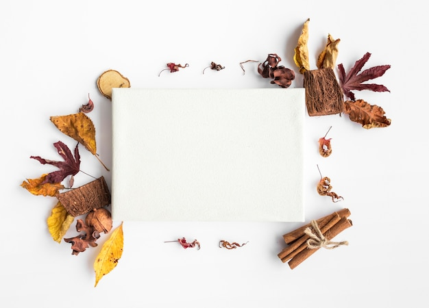 Top view leaves arrangement with piece of paper