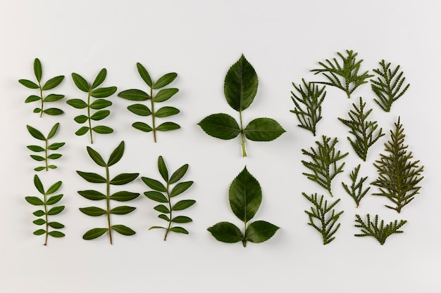 上面図の葉コレクション