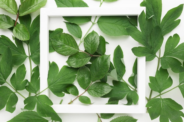 Top view of leaves frame concept with copy space