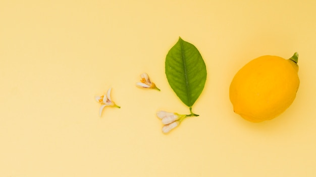 Top view lemon with leaf and flowers